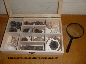 Nature Table from Suzy Homeschooler (2)