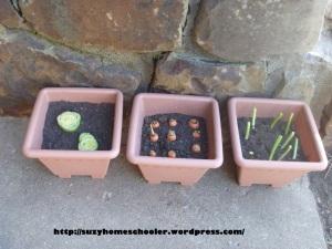 Pimp My Patio Day 7 from Suzy Homeschooler - Veggie Scraps Garden