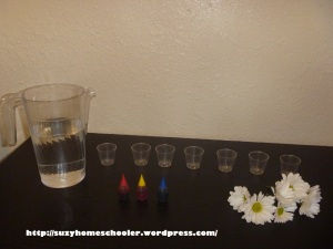 Activities Using Real Flowers for Flower Theme Week from Suzy Homeschooler (1)