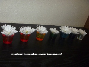 Activities Using Real Flowers for Flower Theme Week from Suzy Homeschooler (2)
