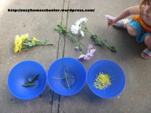 Activities Using Real Flowers for Flower Theme Week from Suzy Homeschooler (3)