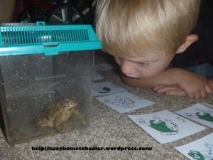 Impromptu Frog Studies, Suzy Homeschooler (1)