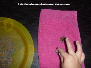 Travel-Sized Pet Rock and Pet Rock Home from Suzy Homeschooler (4)