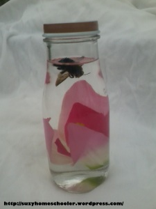 New Discovery Bottles from Suzy Homeschooler (2)