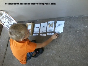 Insect Names on a Sticky Spider Web from Suzy Homeschooler (3)