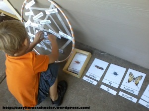 Insect Names on a Sticky Spider Web from Suzy Homeschooler (4)