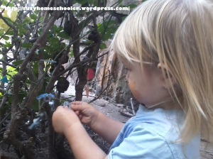Fairy Garden, Suzy Homeschooler (11)