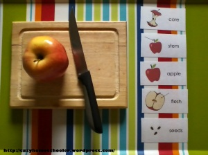 Harvest Theme Week from Suzy Homeschooler - Dissecting Apples (1)